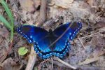 Butterfly by Brahmastra