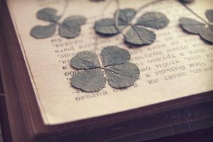 my collection of clover by Rosalia-Lombardo