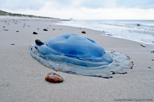 Jellyfish - blue like the ocean by luckydonald