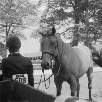 Horse Show I by prestonthecarartist