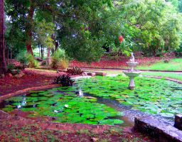 Fountain and Lilypad Pond by Sing-Down-The-Moon