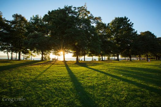 Late afternoon in the park... by Milanogreg
