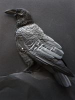 Paper Sculpture :The Crow by 8thLeo