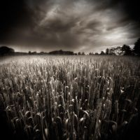 Field...2 by denis2