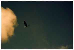 soaring by eythan