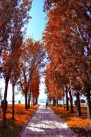 Last days of autumn by pkritiotis