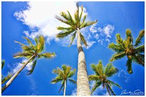 Coconut Trees Five by jaydoncabe