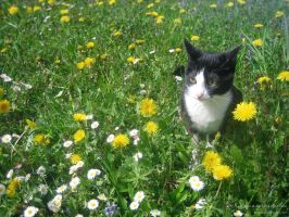 Kitty in a spring meadow by love1008