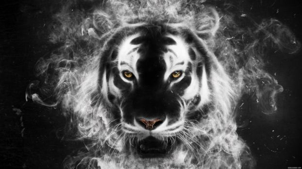 Tiger from my mind by Michalius89