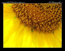 Yellow by AO-Photography