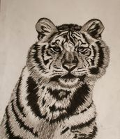 Tiger in charcoal by RichardFrost