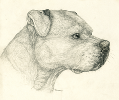 Pencil Pitbull by Tsebresos