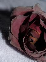 Dried Rose by FullofSecrets