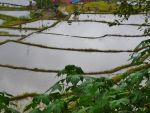 RICE TERRACES by isabelle13280
