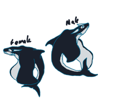 Orca Dragon by ShattenWolf
