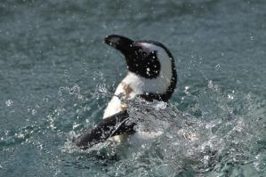 penguin splash 2 by NinaHoerz