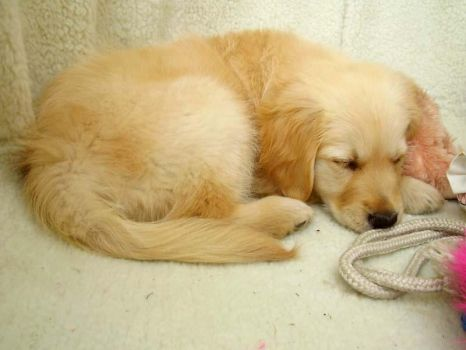 Sleepy Puppy by Lorna-Ann8