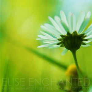 Simplicity by EliseEnchanted