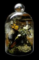 Monarch butterfly and Tobacco Horn Moth bell jar by Meddling-With-Nature
