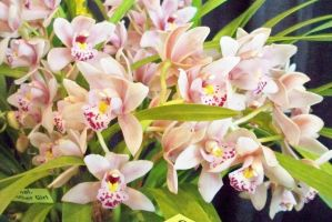 Orchid Cluster by EuterpeMuse