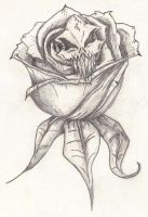 Skull Rose by TheBIGJug