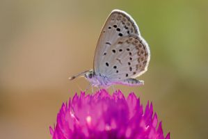 Pale Grass Blue by inckurei