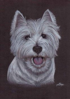West Highland white terrier - Rodis by alvija