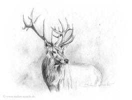 Deer sketch by AtelierArends