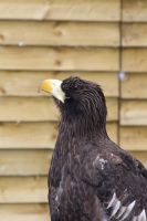 Eagle3 by ditney