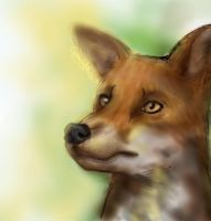 Mr. Fox by catgirl123