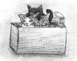 Kittens in a Box by Meorow