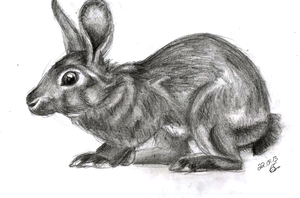 Rabbit by Lunell
