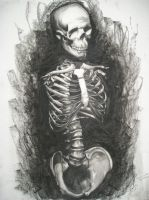 Human Anatomy: Skeleton Torso by SabreKitty