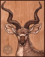 Kudu Woodburning by dakazi