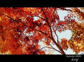 Red leafs by niwaj