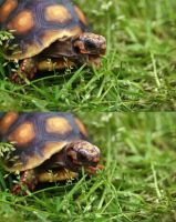 Image Result For The Turtle