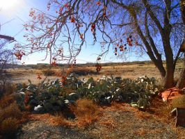 Cacti Patch by SharPhotography