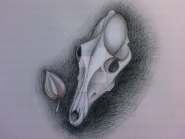 Skull and a flower by LadyFromEast