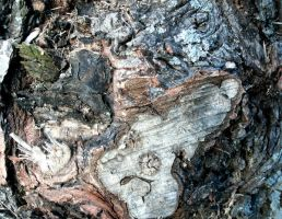 Tree Bark-2 by Rubyfire14-Stock