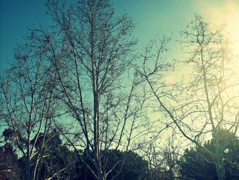 Park Trees. by Givemore