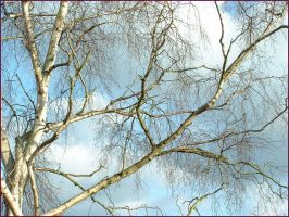 treesbeautiful sky2 by psychedelicurchin