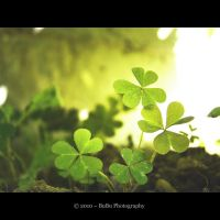 ... Irish Clover... by bogdanici