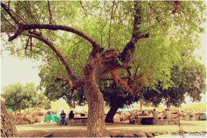 In the shade of the old tree by ShlomitMessica