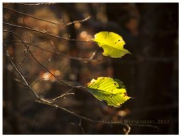 Still green in October by Vampirbiene
