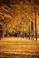 Autumn 2009 by Angelicc