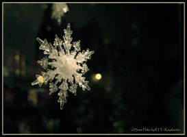 Snow Flake by kayaksailor