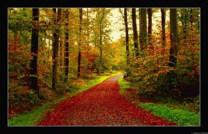Road to Autumn by JoInnovate