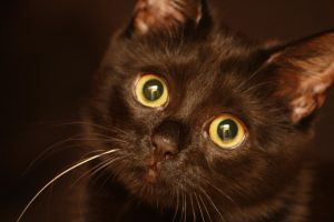 Black Kitten 14047795 by StockProject1