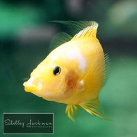 Sad Fish by ShelleyJackman