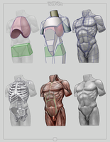 Anatomy for Sculptors by anatomy4sculptors
